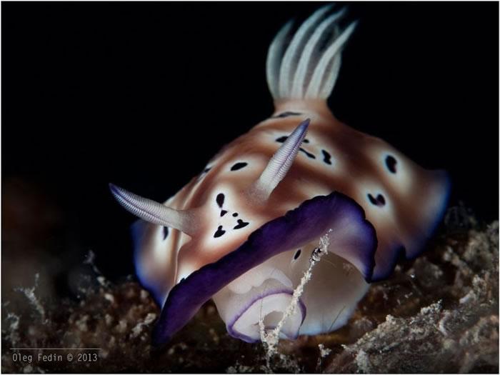 Nudibranchs Mabul Island