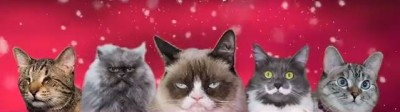 Christmas Music Video Production Starring Grumpy Cat And Colonel Meow