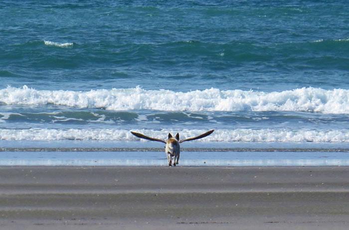 dogbird-perfect-timing
