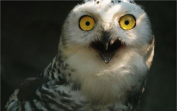 extremely-shocked-animals15