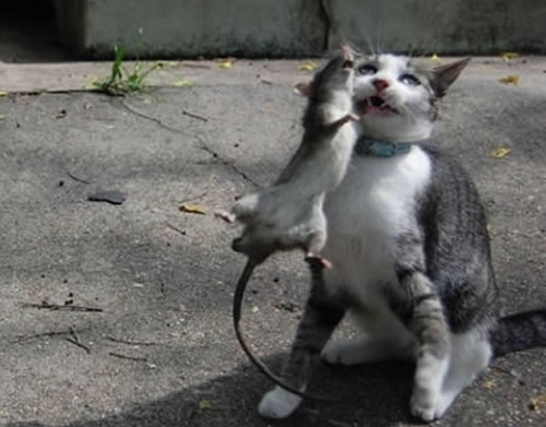 10 Crazy Animal Incidents That Would Leave Accident Attorneys Puzzled 6