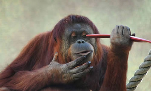 10 Crazy Animal Incidents That Would Leave Accident Attorneys Puzzled 9