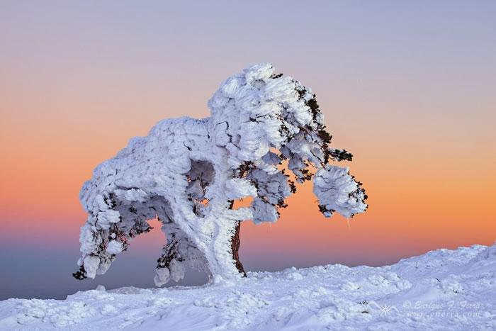 13. Winter spell by Enrique F. Ferrá