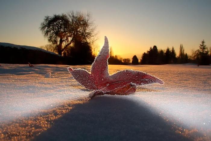14. Frozen Leaf by Ryan Blyth