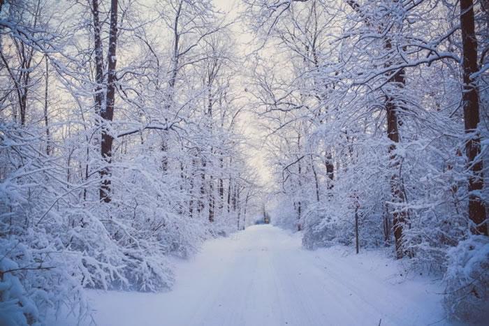 15. White Road