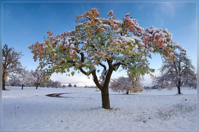 Spectacular High Quality Images Of A Snowy Winter
