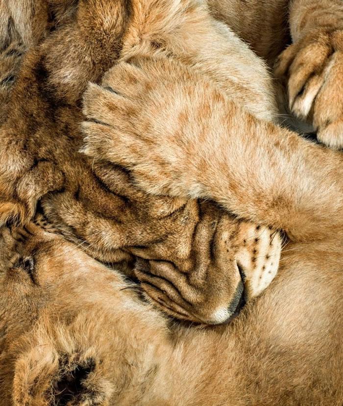 Amazing Animal Portraits - Affection