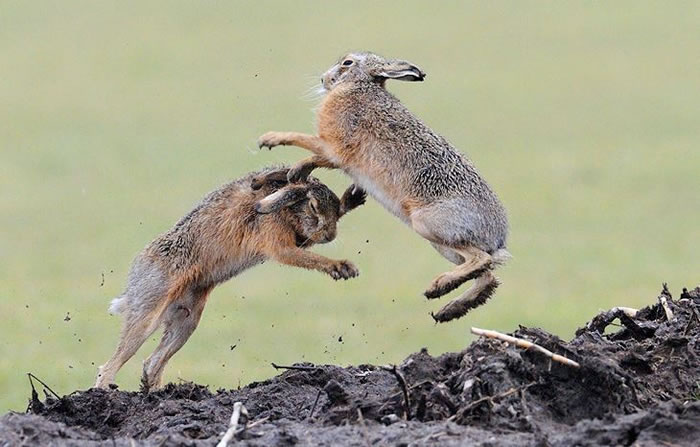 Amazing Extreme Nature Top 50 Awesome Animal Attacks Stock Photos Ever  (17)