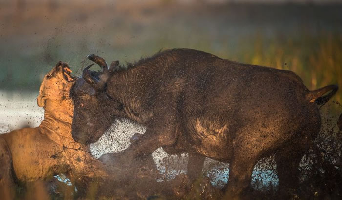 Amazing Extreme Nature Top 50 Awesome Animal Attacks Stock Photos Ever  (19)