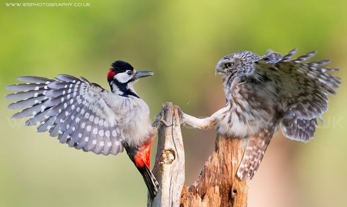 Amazing Extreme Nature Top 50 Awesome Animal Attacks Stock Photos Ever  (22)