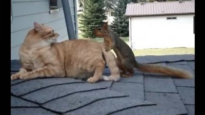 Cat Adoption Of Squirrel Playmate Hilarious Video