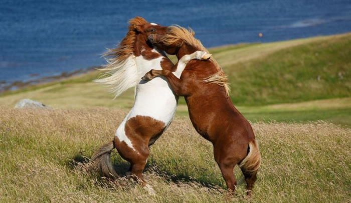 Extreme Nature Top 50 Awesome Animal Attacks Stock Photos Ever  (13)