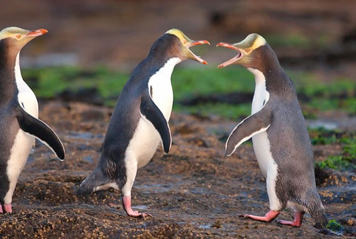 Extreme Nature Top 50 Awesome Animal Attacks Stock Photos Ever  (15)