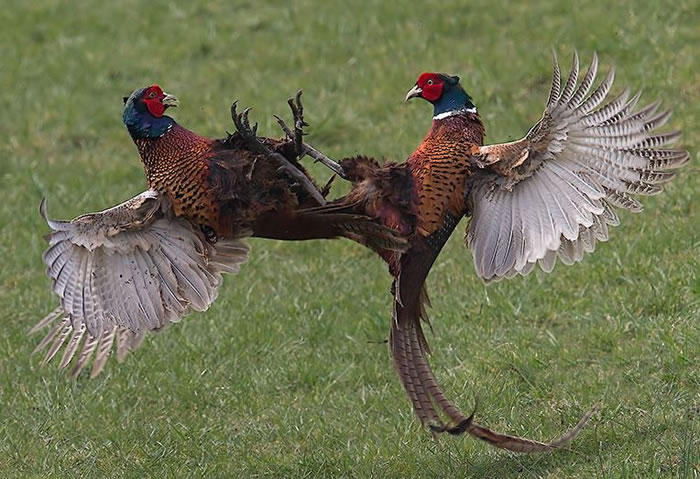 Extreme Nature Top 50 Awesome Animal Attacks Stock Photos Ever  (18)