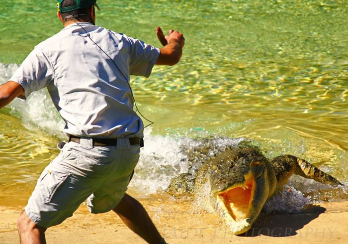 Extreme Nature Top 50 Awesome Animal Attacks Stock Photos Ever  (21)