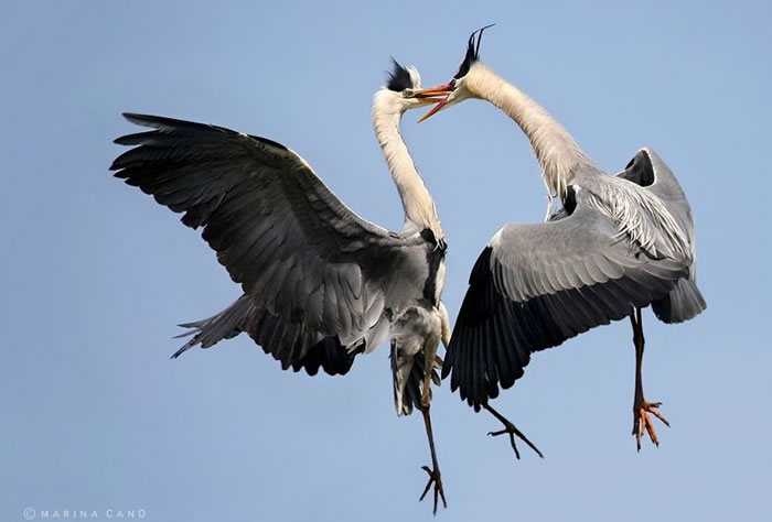 Extreme Nature Top 50 Awesome Animal Attacks Stock Photos Ever  (22)