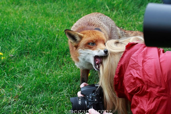 Extreme Nature Top 50 Awesome Animal Attacks Stock Photos Ever (25)