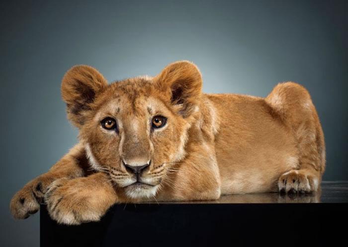 Amazing Animal Portraits - Guiltlessness