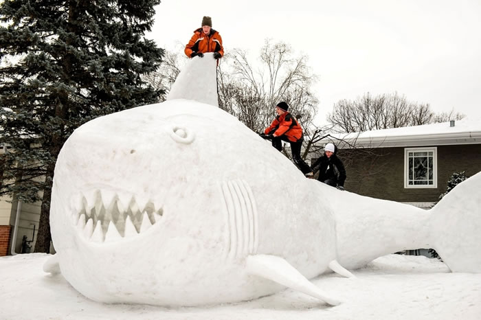 Minnesota Brothers Build Outdoor Sculpture Of A Great White Snow Shark 4