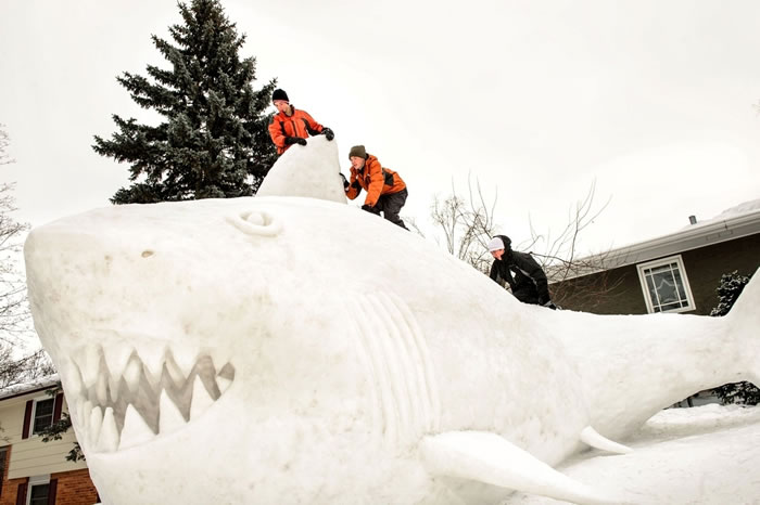 Minnesota Brothers Build Outdoor Sculpture Of A Great White Snow Shark 5