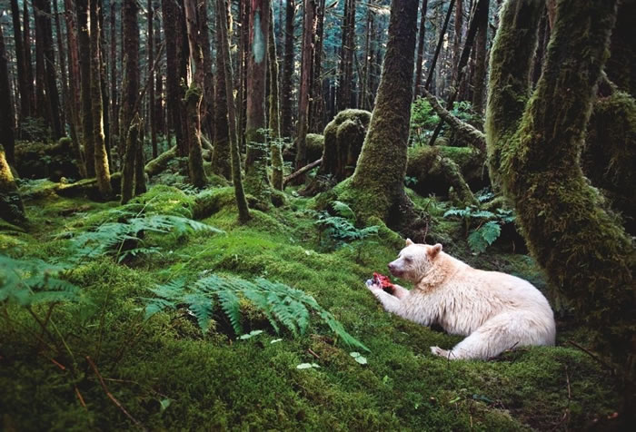 Rare And Amazing Pictures From The National Geographic Photos Library