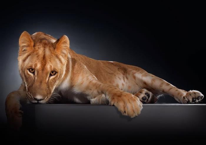 Amazing Animal Portraits - Strike a pose