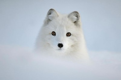 Magical Wildlife Pictures Of Animals In The Snow