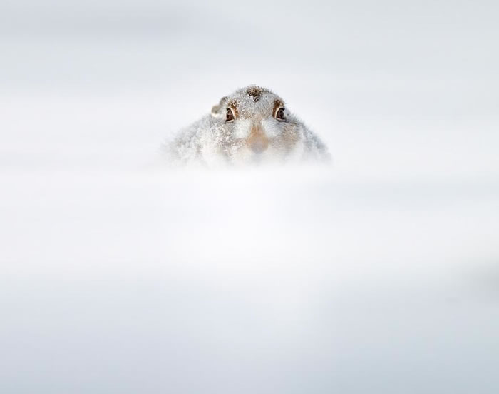 animals-in-winter-15