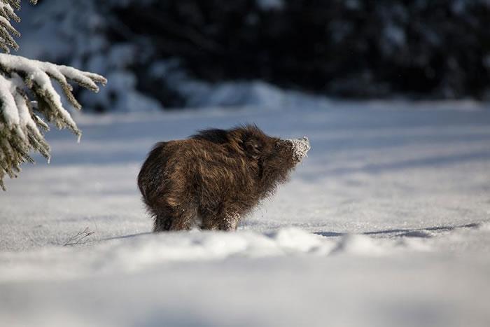 animals-in-winter-16