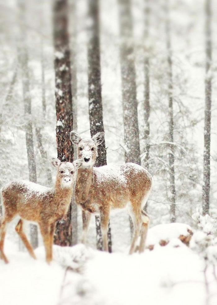 animals-in-winter-4