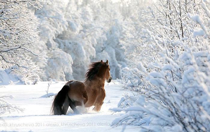animals-in-winter-8