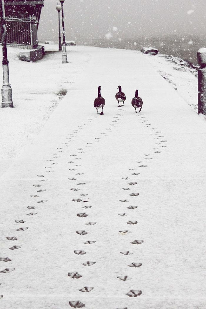 animals-in-winter-9