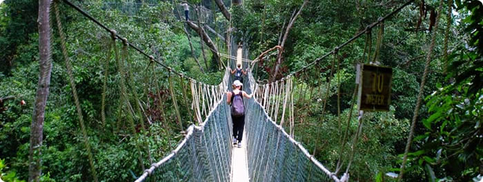 canopy walks