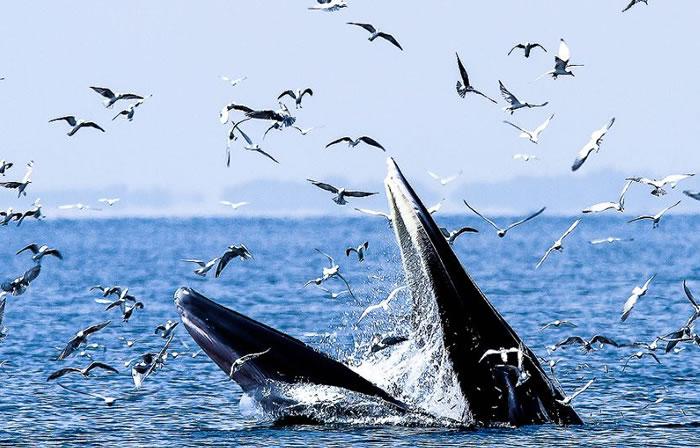 10 Amazing Animals Gone Fishing Stock Photos (2)