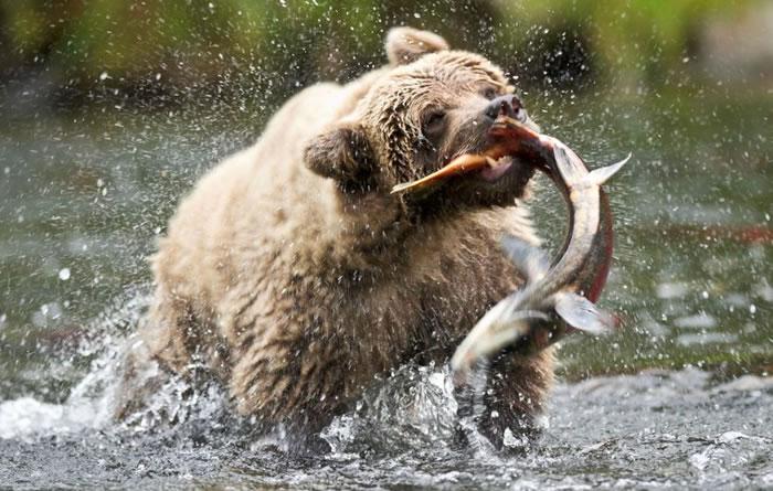 10 Amazing Animals Gone Fishing Stock Photos (3)