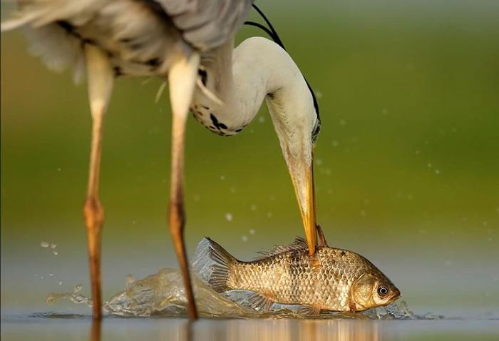 10 Amazing Animals Gone Fishing Stock Photos (6)