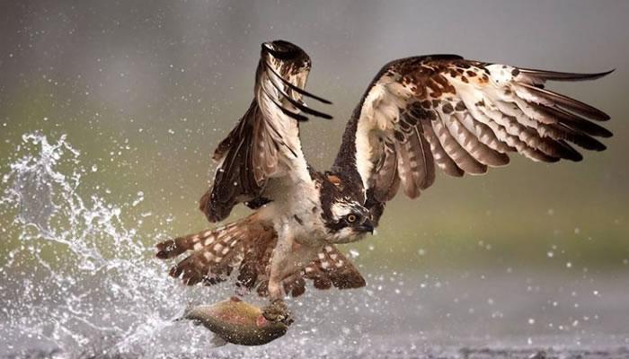 10 Amazing Animals Gone Fishing Stock Photos (7)