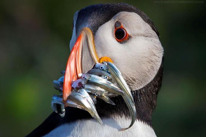 10 Amazing Animals Gone Fishing Stock Photos (8)