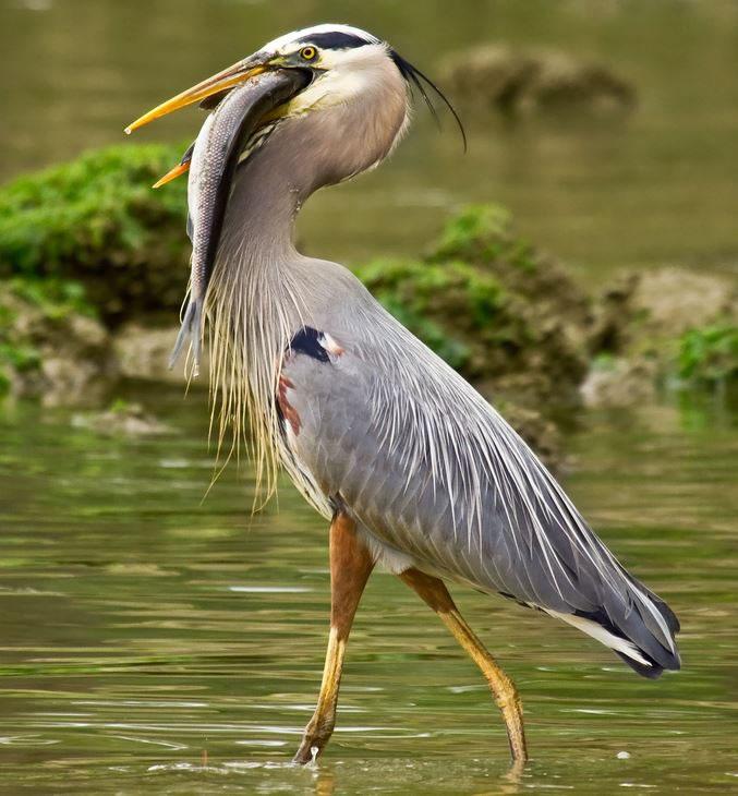 10 Amazing Animals Gone Fishing Stock Photos (9)