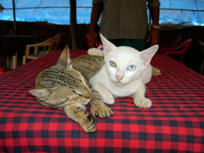 11. Cats Eyes