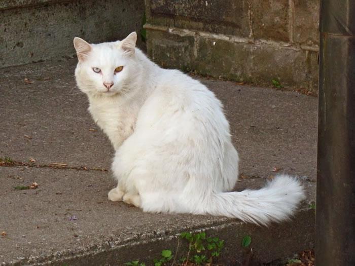 18. strange cat