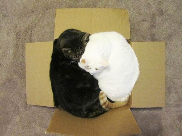 20 Crazy Cat Beds For Over Sized Kitties (10)