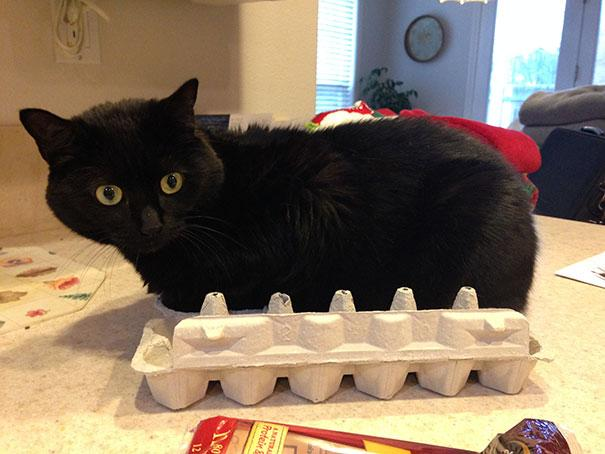 20 Crazy Cat Beds For Over Sized Kitties (3)