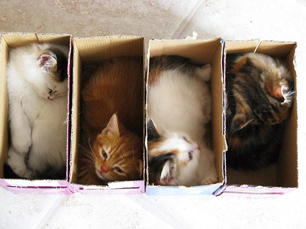 20 Crazy Cat Beds For Over Sized Kitties (5)
