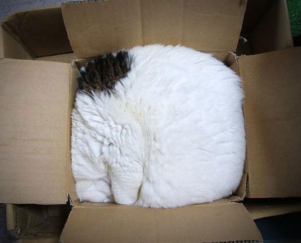 20 Crazy Cat Beds For Over Sized Kitties (7)