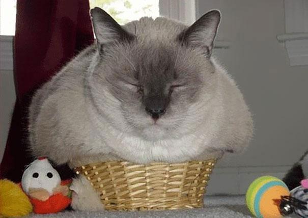20 Crazy Cat Beds For Over Sized Kitties (8)