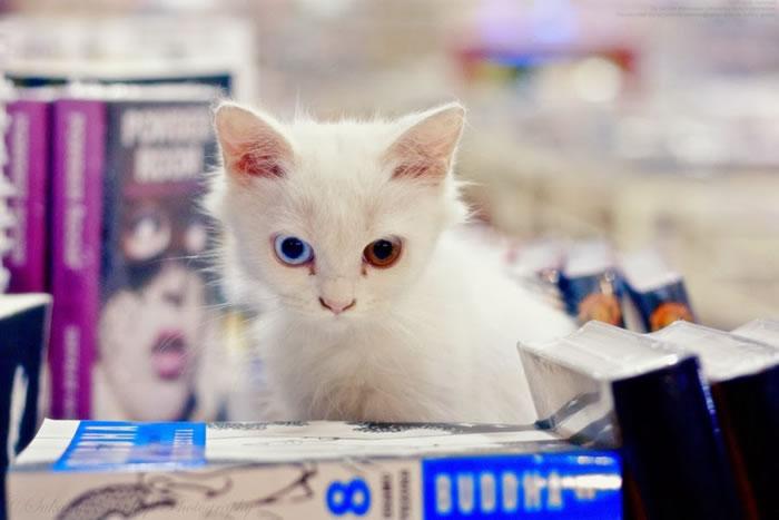 24. Studious Kitten