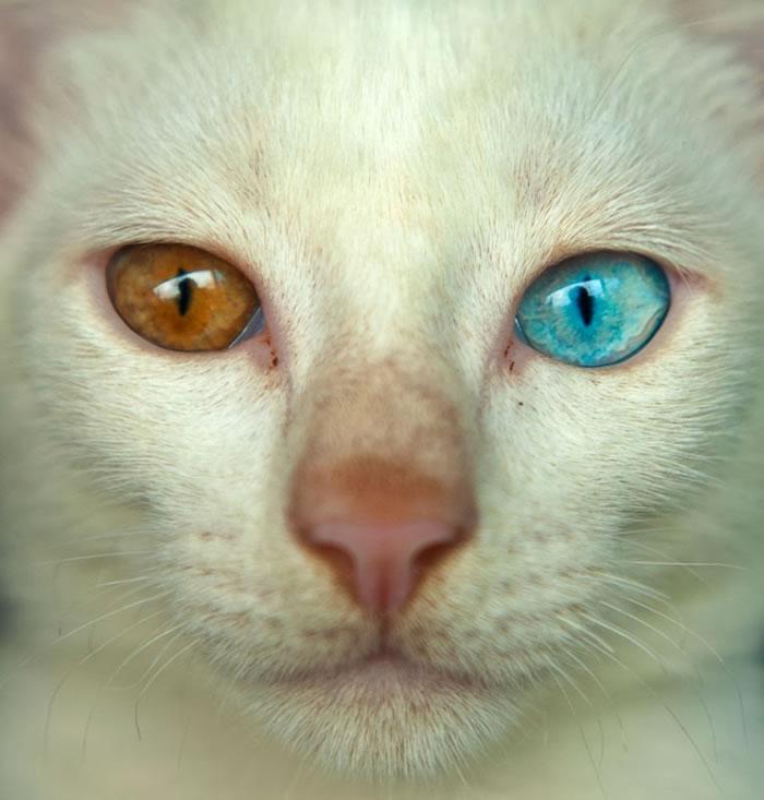 7. Cat eyes