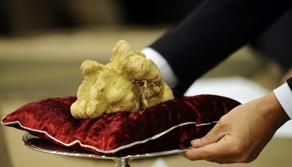 8 white-truffle- Gourmet Gifts - Top 10 Luxury Foods In The World