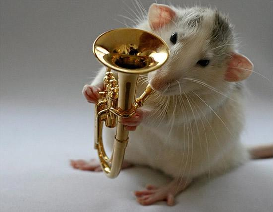 Amazing Musical School For Talented Rats (1)